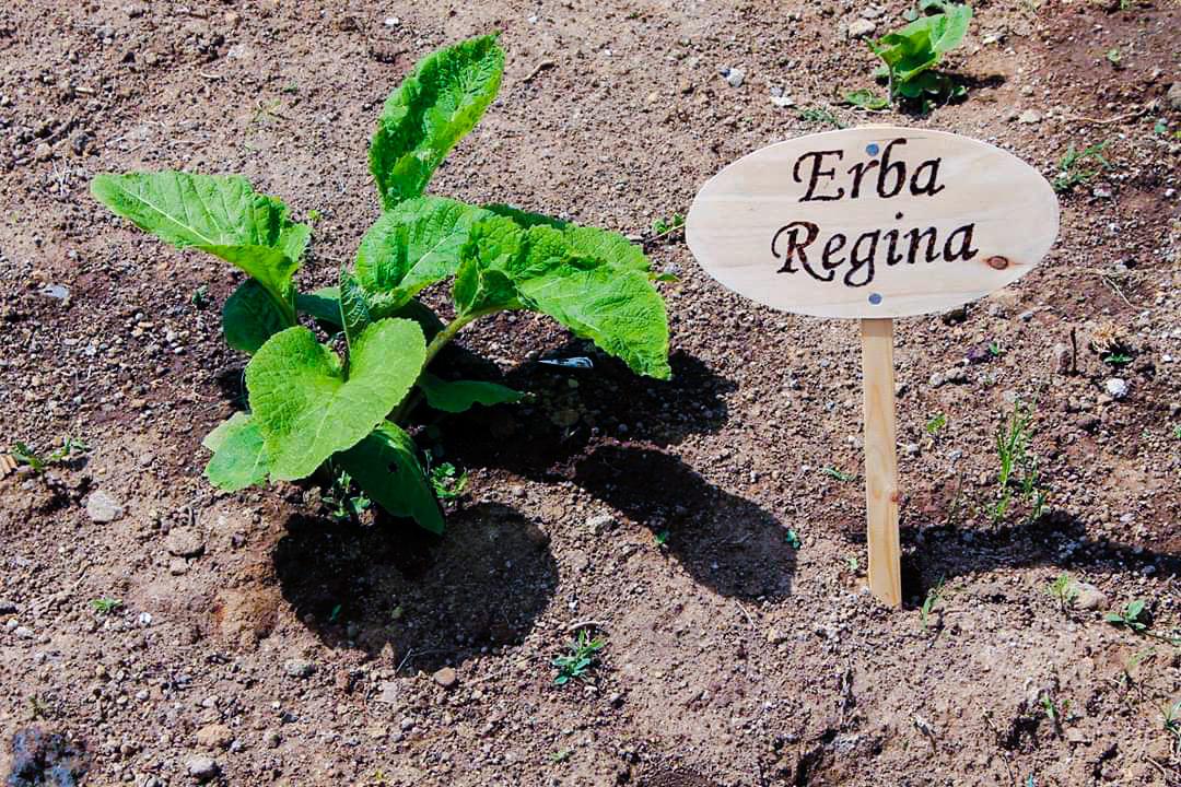 Agriturismo Castelli Romani